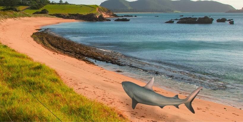 將鯊魚放到沙灘上